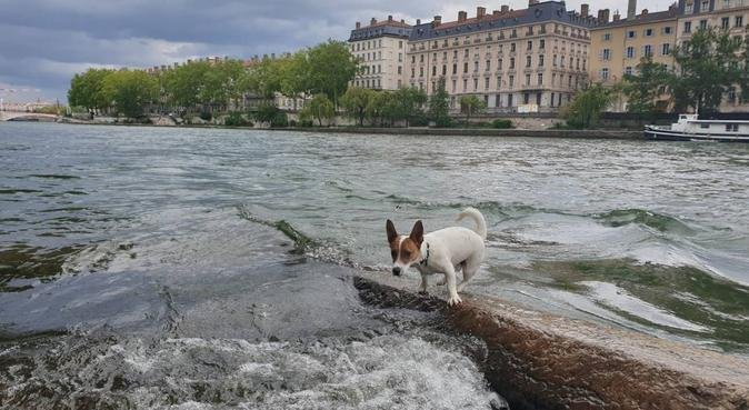 Un véritable amoureux des animaux | Lyon, dog sitter à Lyon