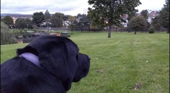 Happy Doggoo, dog sitter in Aberdeen, UK