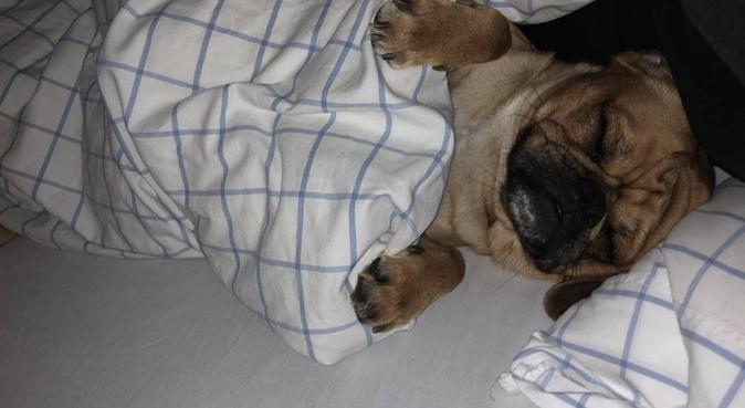Lukk øynene, åpne alt det andre!, hundepassere i Fyllingsdalen