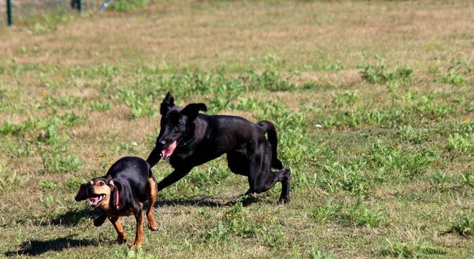 Lekfull hundpassning i Stockholm, hundvakt nära Norsborg