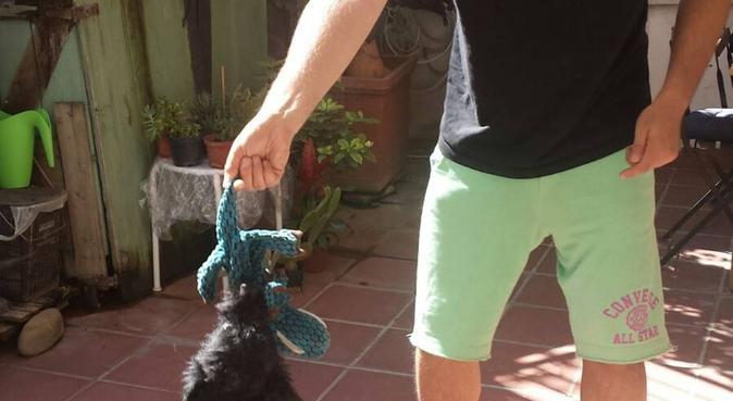 Ospitalità,affetto e passegg in casa con giardino, dog sitter a Firenze