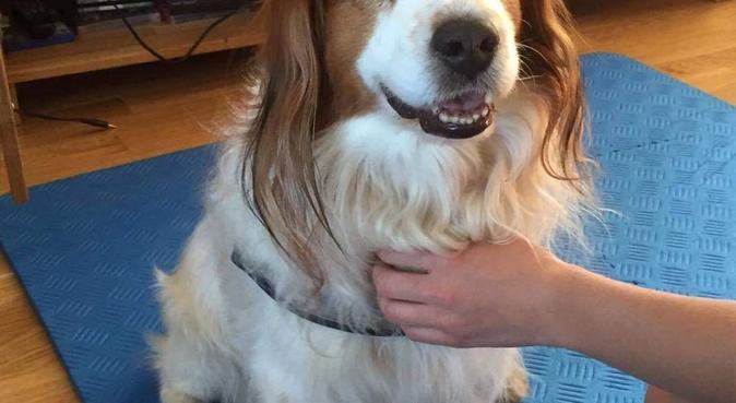 Kjærlighet for dyr, hundepassere i Oslo