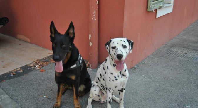 La tatie de tout les animaux, dog sitter à Menton