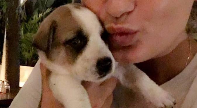 Hundälskande student erbjuder hundpassning, hundvakt nära Göteborg