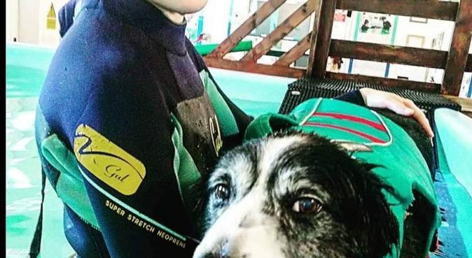 Doggie daycare, dog sitter in Lisburn