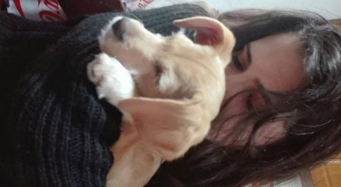 Coccole e tante passeggiate con me💞, dog sitter a Quartu Sant'Elena