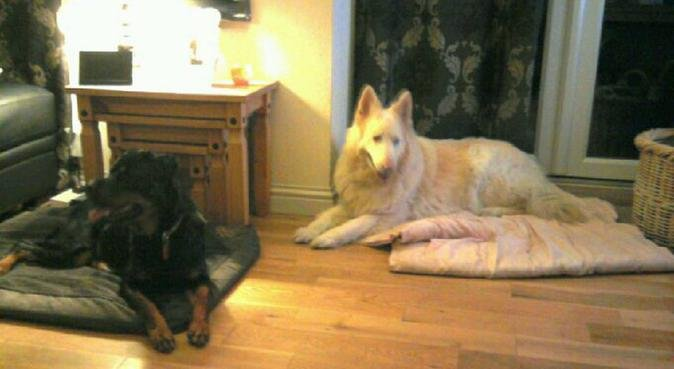 Doggy paradise, cuddles in Colchester a plenty., dog sitter in Colchester