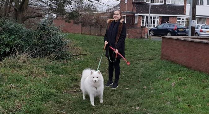 Playful and Exciting Dog Walking in North London, dog sitter in Enfield