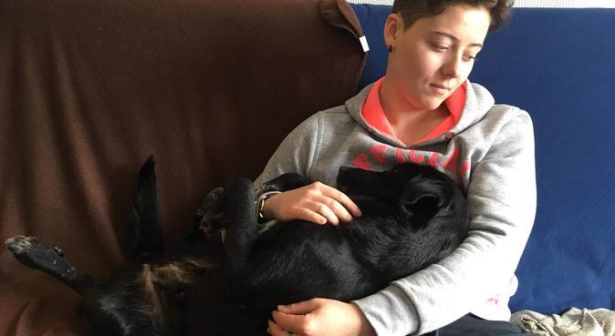 Promenez moi avec votre animal de compagnie, dog sitter à Rennes