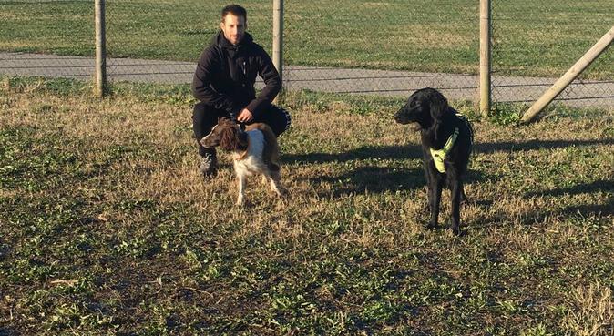 Tante passeggiate e divertimento assicurato, dog sitter a Venezia, VE, Italia