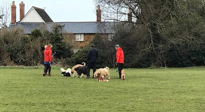 Juras Doggy Care, dog sitter in Northampton