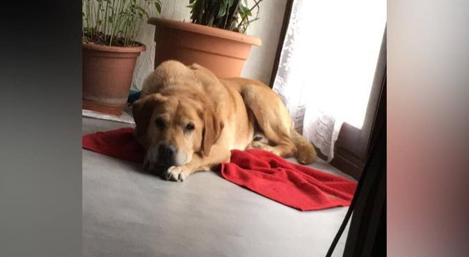 Dog Addict 💜, dog sitter à Seyssinet-Pariset