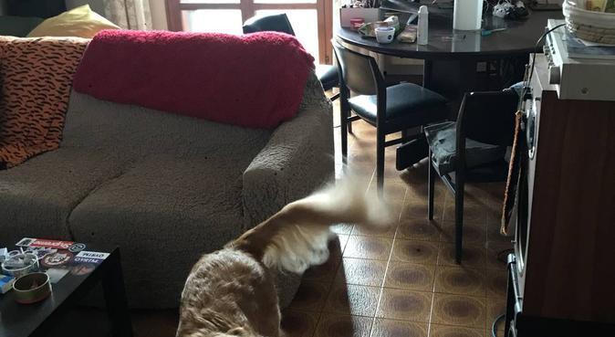 Il dottor Doolittle è arrivato in città!, dog sitter a Calderara di Reno, BO, Italia