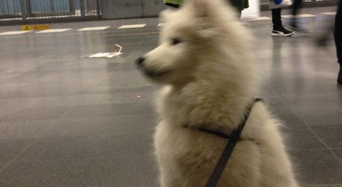 Erfaren hundkär student har tid över för din hund, hundvakt nära Malmö