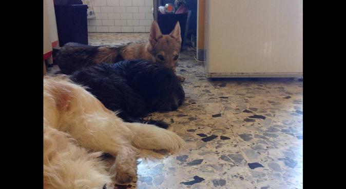 Amore assicurato per il tuo peloso, dog sitter a Turin