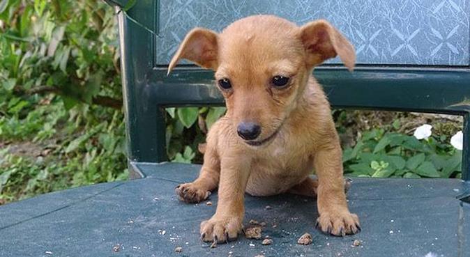 Des câlins et beaucoup de bonheur !, dog sitter à Bagnolet