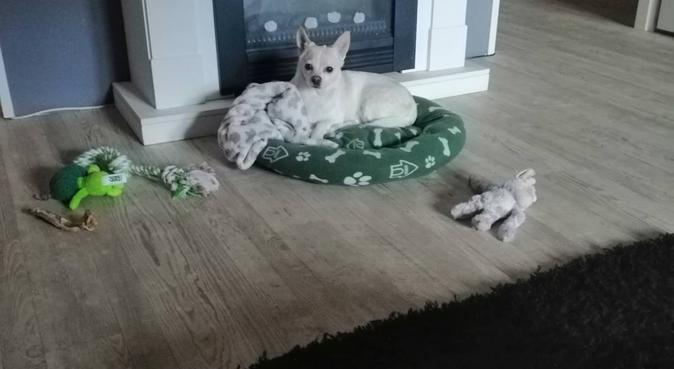 Love 4 dogz Scheveningen, hondenoppas in Den Haag