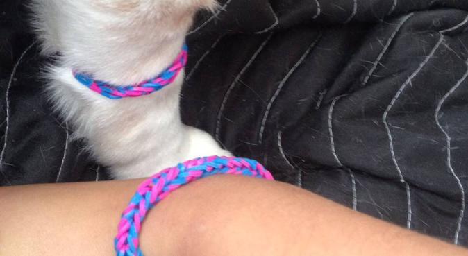 I love dogs😍, hondenoppas in Papendrecht