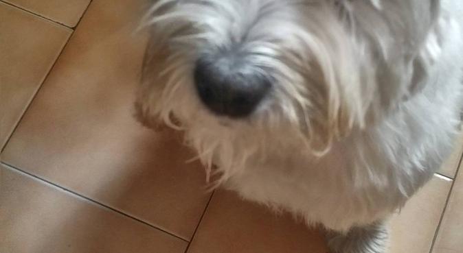 Coccole, dolcezza, amore: la ricetta perfetta!, dog sitter a Bologna