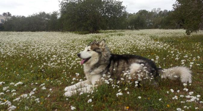 Hay una amiga en mi, canguro en Las Rozas de Madrid, España
