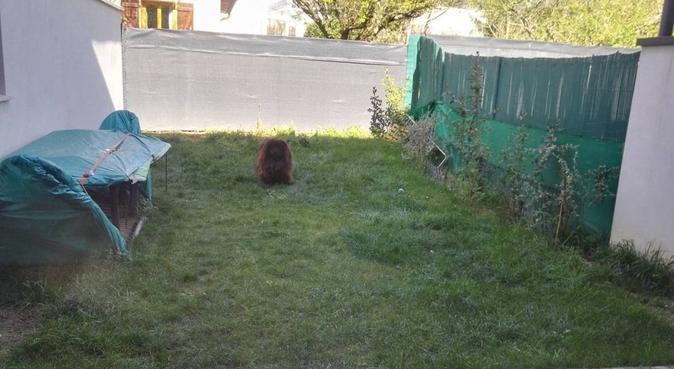 Garde, balade, jeux et câlins à volonté, dog sitter à Toulouse