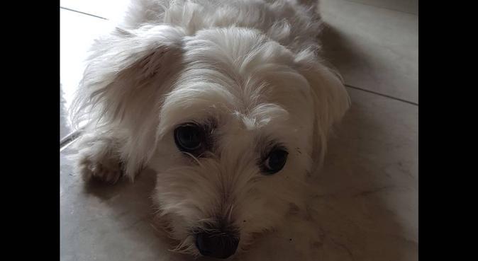 Divertimento e tante coccole per i miei amici a 4, dog sitter a Genova