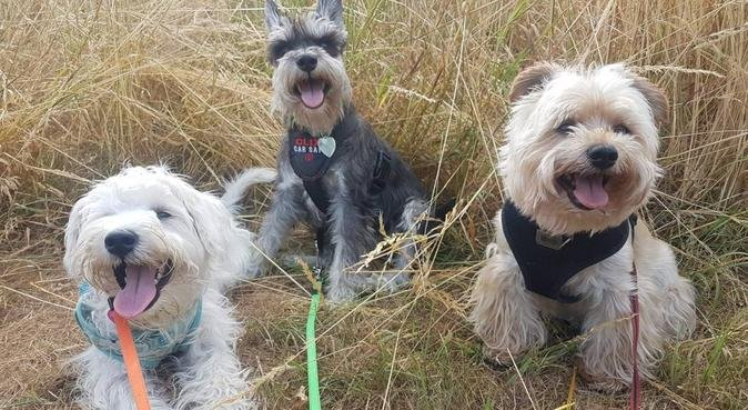 Experienced small dog boarding, dog sitter in Nottingham