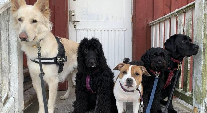 Erfaren dogbuddy i Bromma, hundvakt nära Bromma