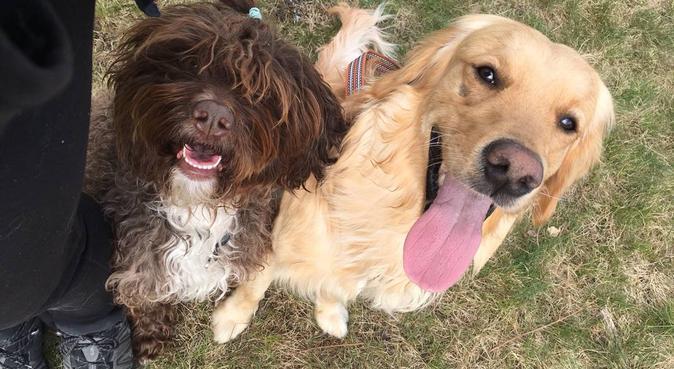 Rolig och kärleksfull hundpassning!, hundvakt nära Täby, Sverige
