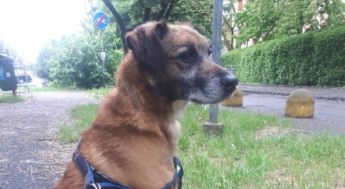 Tanto amore e coccole con due dogsitter 🐾, dog sitter a Modena