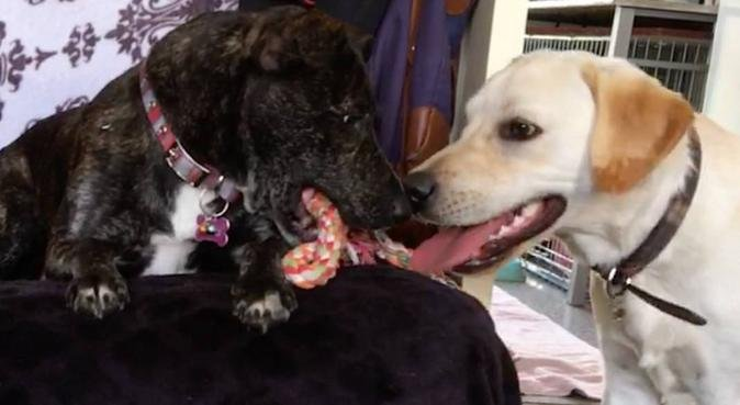 Puppy play and snuggle center, dog sitter in Colchester