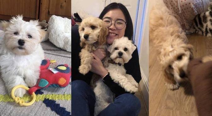Experienced dog carer, and cuddler., dog sitter in Cardiff