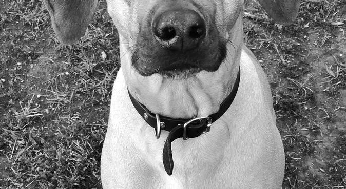 Aktiv, erfaren och ansvarsfull DogBuddy 🐕, hundvakt nära Stockholm