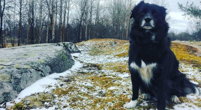 KIWI DOG WALKER - hirer hourly and for short walks, hundvakt nära Uppsala