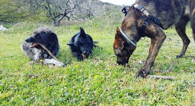 Unas colonias perrunas!, canguro en Vallromanes