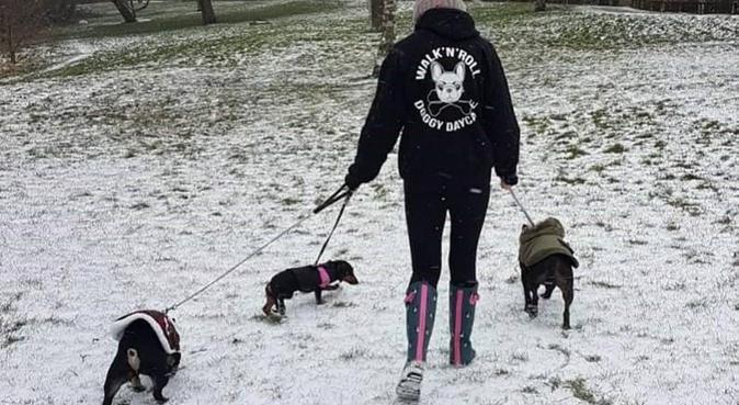Walk'n'Roll Doggy Daycare, dog sitter in Birmingham