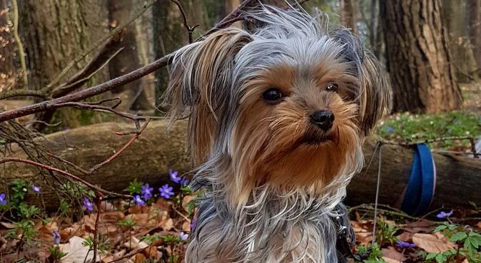 Erfaren kjærlig hundepasser.  www.hundehjelp.no, hundepassere i Moss