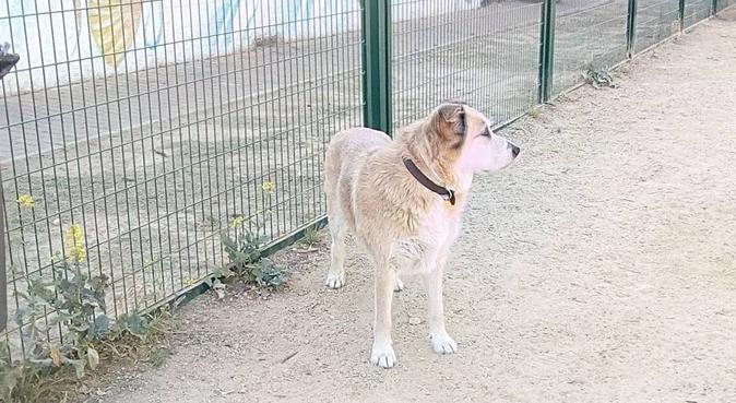 Deje a su mascota en las mejores manos., canguro en Huelva