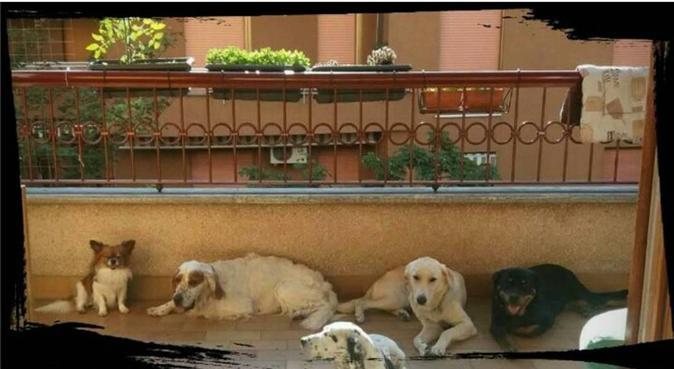 LUNGHE PASSEGGIATE E TANTE COCCOLE, dog sitter a Monza