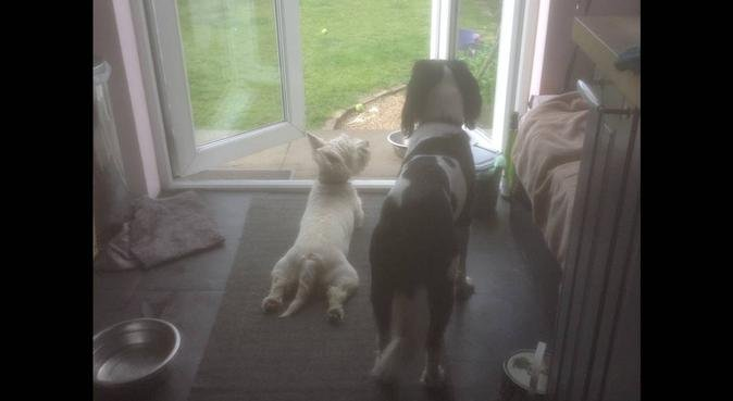 Happy dogs in Newtongrange, dog sitter in Dalkeith