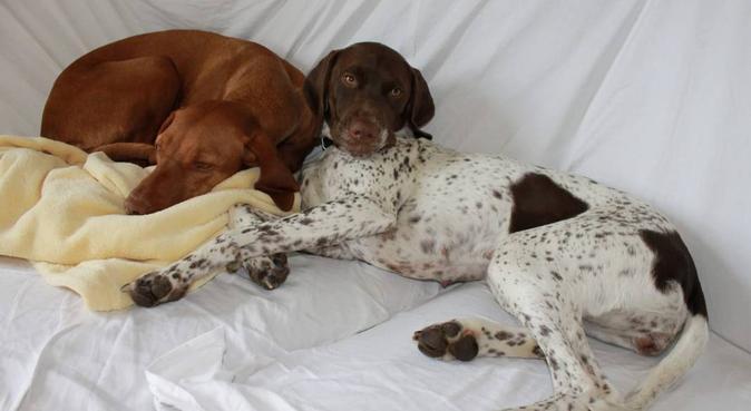 Campagna e affetto al 'suo' cospetto!, dog sitter a colombarone
