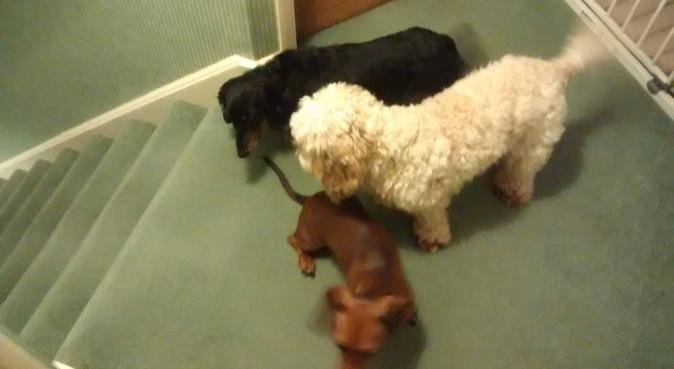 Lots of fun and attention on offer with us, dog sitter in Havant