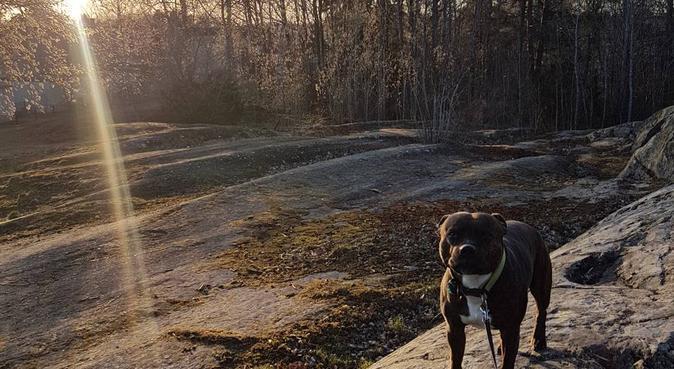 Dygn/Dag/Rastning - 25st hundar, hundvakt nära Norrköping