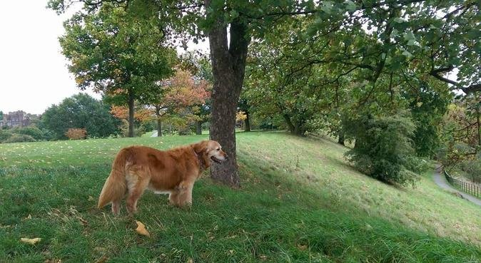 Fun and love at Woofy Land, dog sitter in London