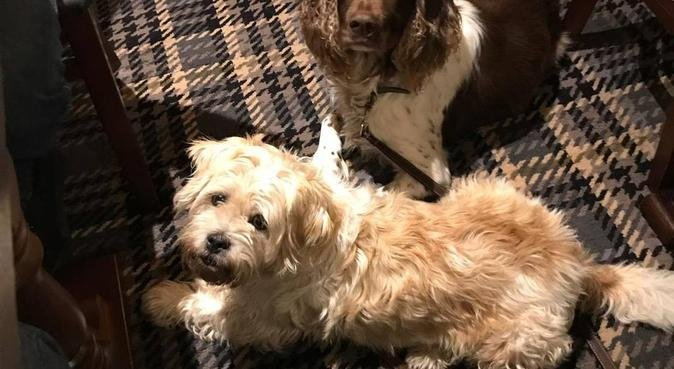 Scooby's Den Boarding, day care & walking. Upton C, dog sitter in Chester