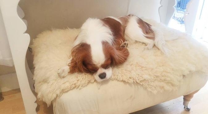 Dog Heaven with a garden flat and dog trainer, dog sitter à London Borough of Southwark