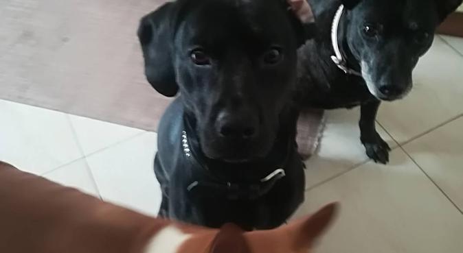 Tanta cura e affetto per il tuo migliore amico, dog sitter a Cinisello Balsamo
