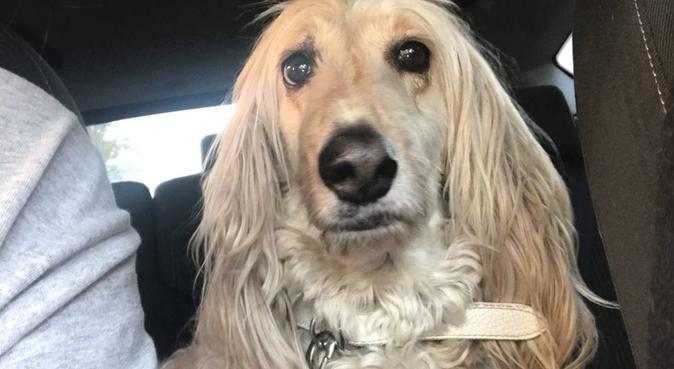 Isabelle & co garde vos chiens :), dog sitter à villeurbanne