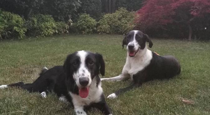 PASSEGGIATE E DIVERTIMENTO, dog sitter a Brescia