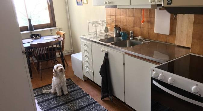 Två hundälskare söker hundpassning i lunden, hundvakt nära Göteborg